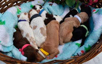 Puppies-mobile
